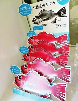 Even 'Nodoguro' fish can be expressed by cutting its shape